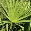 ノコギリヤシに含まれるフィナステリドと脱毛たんぱく質の関係