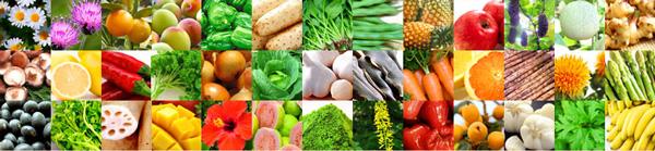 109種類酵素