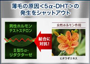 A-DHTホルモン理論