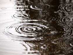 梅雨の膨張ヘア対策!髪の広がり・うねりを防ぐには、椿オイルが効果的!