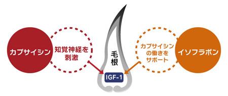 IGF-1育毛理論