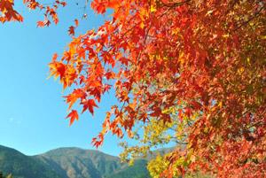 秋の抜け毛対策!季節の変わり目の紫外線に要注意!