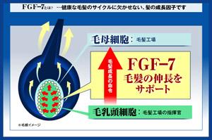 fgf-7
