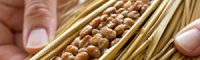 頭皮ケアは日々の食にあり!美髪には毎日ネバネ〜バ納豆・山芋を食べよう!!